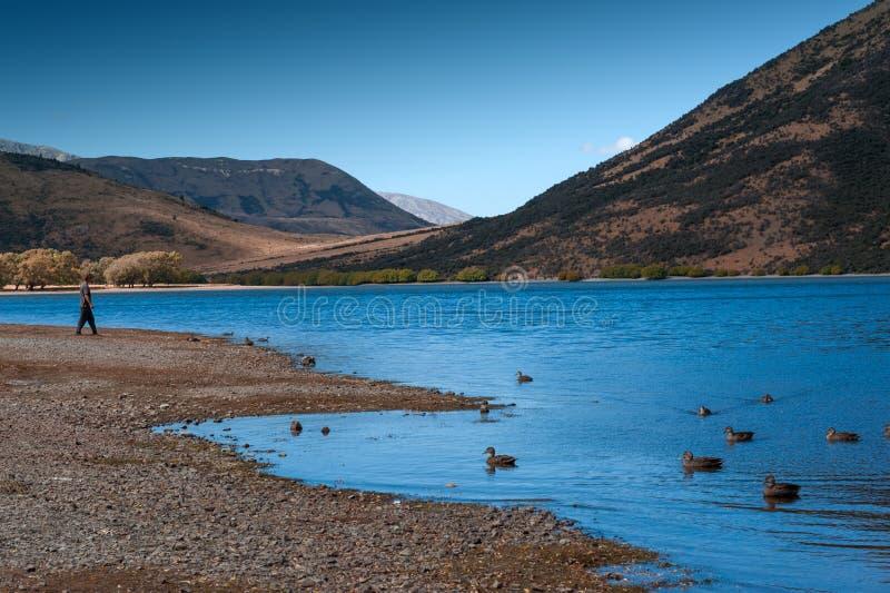 Озеро Pearson/охраняемая природная территория Moana Rua расположенная в Craigieburn Forest Park в области Кентербери, южном остро стоковые фото