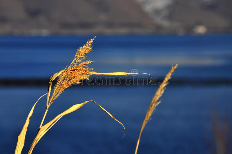 озеро sevan стоковое фото