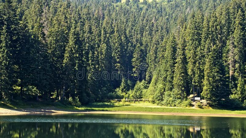 Озеро Synevir в прикарпатских горах в Украине стоковые фотографии rf