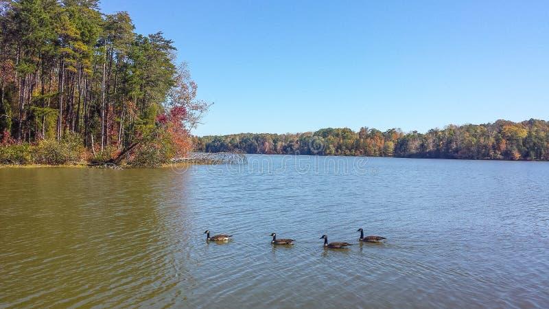 Озеро Thom-A-Lex в Lexington и Thomasville, Северной Каролине стоковые фото