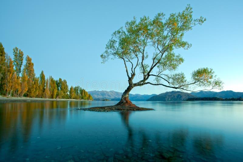 Озеро Wanaka, Новая Зеландия стоковые изображения rf