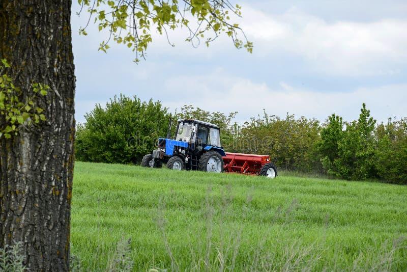 Озимая пшеница катят водителем, который трактора удабривать с минеральными удобрениями Питаться урожаев зерна стоковое фото