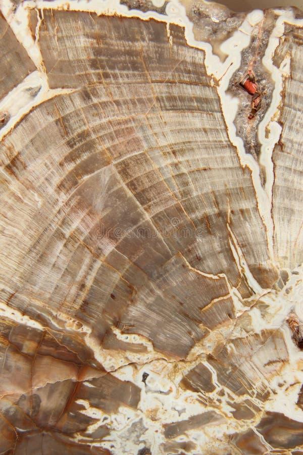 Окаменелая древесина стоковое фото rf