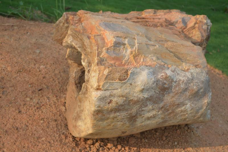 Окаменелое деревянное ископаемый периода миоцена завода angiosperm недавно найденного в парке Amkhoi ископаемом, birbhum, западно стоковая фотография rf