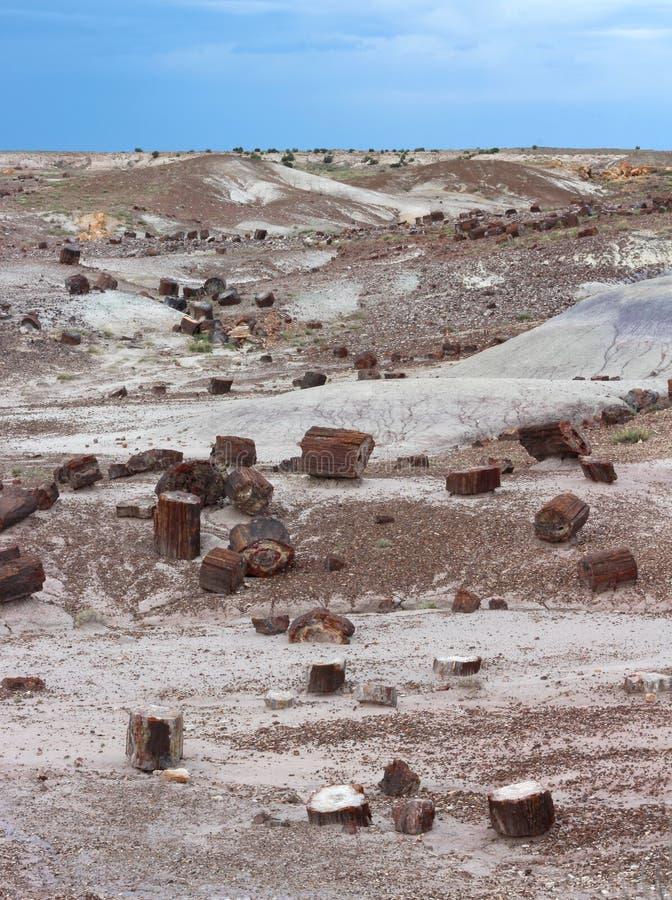 Окаменелые деревянные журналы разбросанные через ландшафт, окаменелый национальный парк леса, Аризона, США стоковая фотография rf