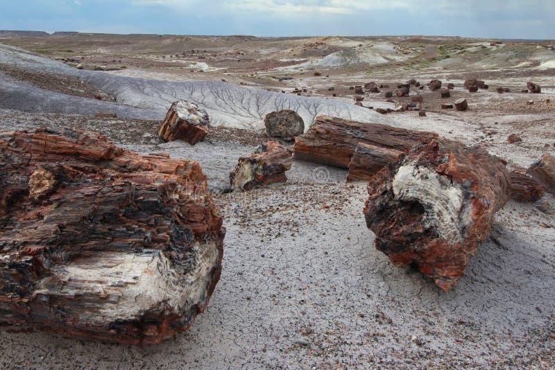 Окаменелые деревянные журналы разбросанные через ландшафт, окаменелый национальный парк леса, Аризона, США стоковые фото