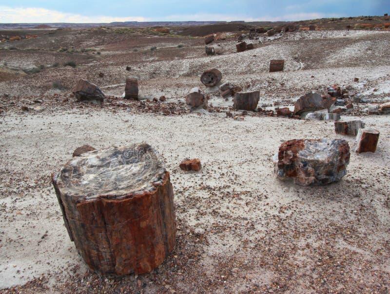 Окаменелые деревянные журналы разбросанные через ландшафт, окаменелый национальный парк леса, Аризона, США стоковое фото rf