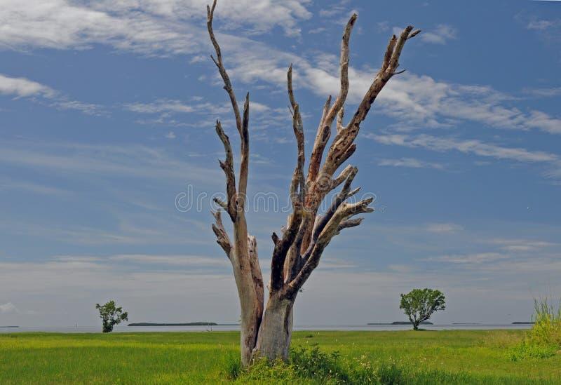 Окаменелое дерево в национальном парке болотистых низменностей стоковое фото