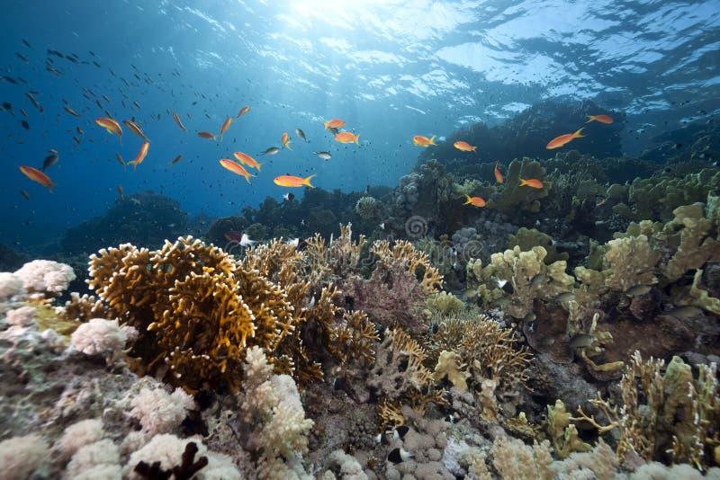 океан рыб стоковая фотография rf