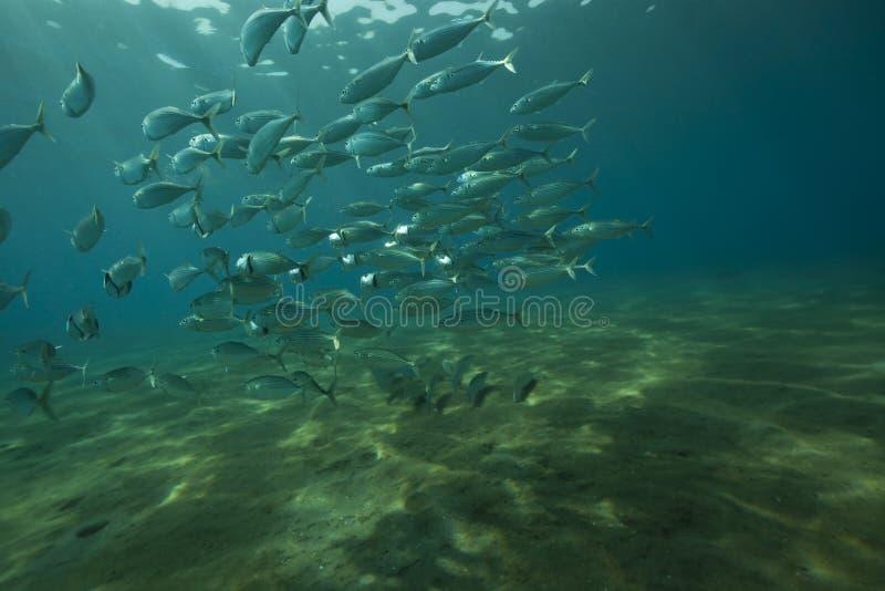 океан скумбрии стоковое фото rf