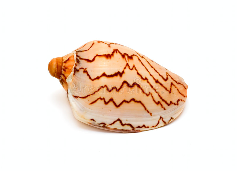 океан cockleshell стоковое изображение