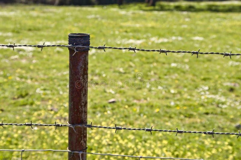 Окисленная загородка поля на природе в сияющем дне стоковые фото