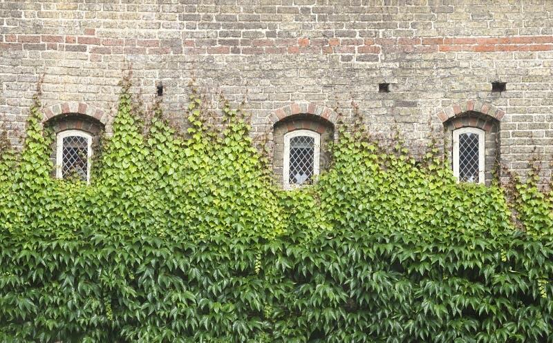 окна плюща стоковые изображения rf