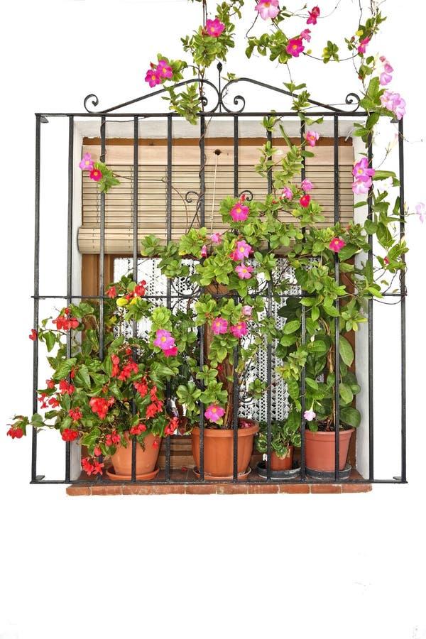 окно баков цветка переднее стоковое фото rf