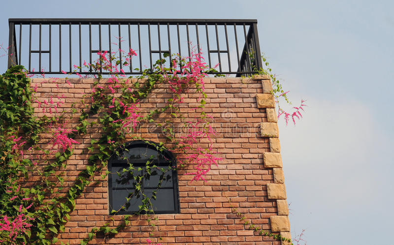 Окно и цветок стоковая фотография