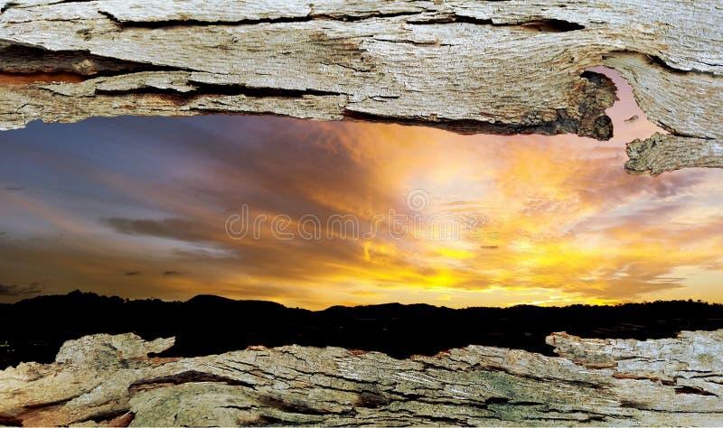 Окно коры дерева к заходу солнца стоковые фото