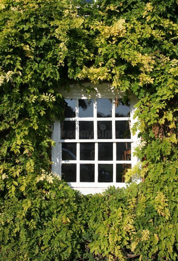 окно орденской ленты стоковая фотография rf