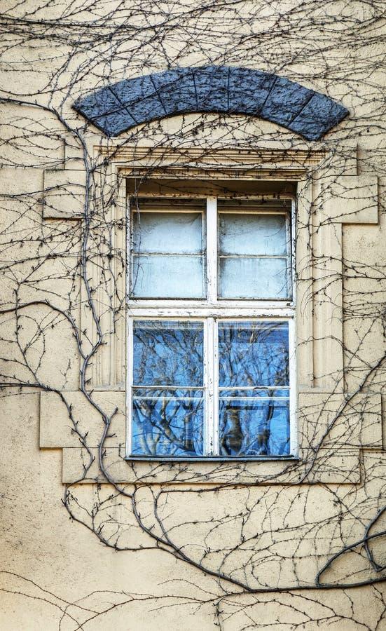 Окно покрытое с плющом в зиме стоковые изображения rf