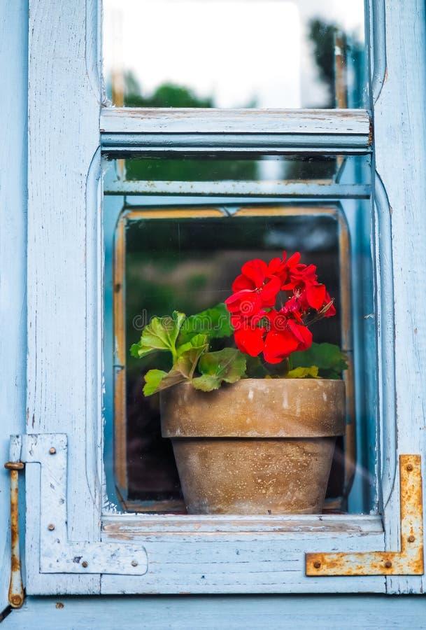 Окно с красным цветком стоковая фотография rf