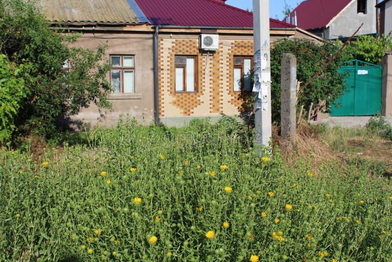Около небольшого дома с красной крыть черепицей черепицей крышей вырастите желтые цветки стоковые фотографии rf