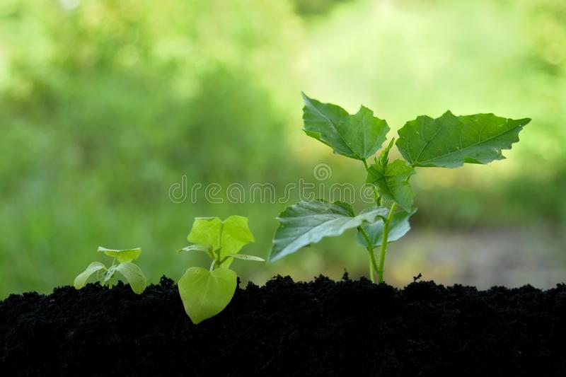Окружающая среда земледелия на концепции шага природы растущей стоковое изображение rf