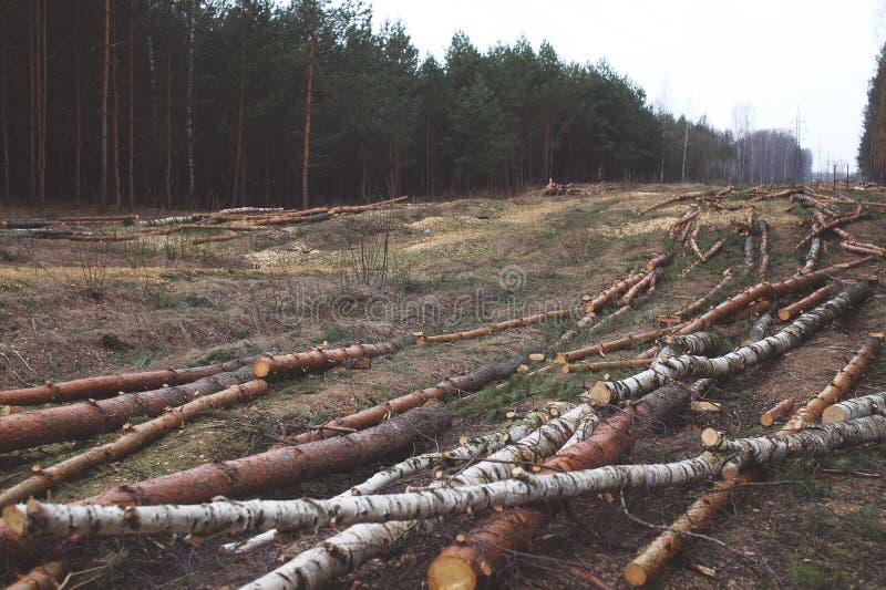 Окружающая среда, природа и концепция леса обезлесения стоковая фотография rf