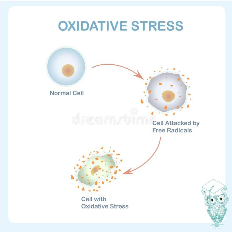 Оксидативная схема стресса Здоровая клетка причиненная нападением свободных радикалов иллюстрация штока