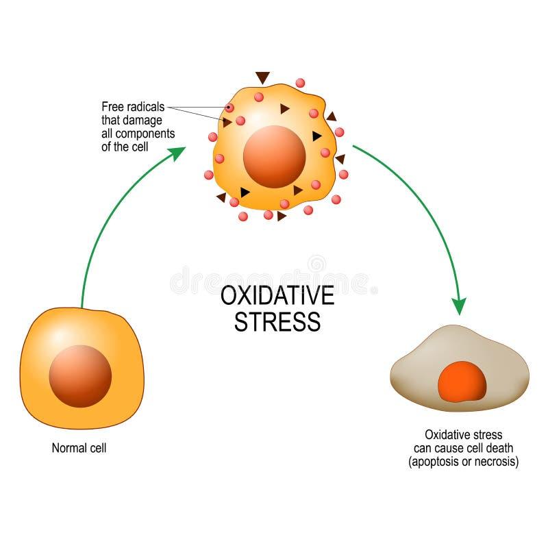 Оксидативный стресс Vector диаграмма для вашего дизайна, воспитательный, науки и медицинского использования бесплатная иллюстрация