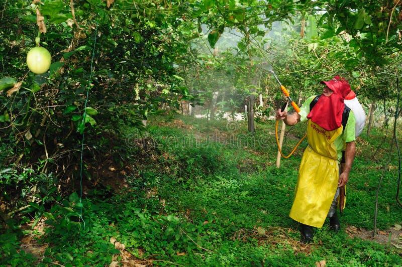 Окуривать плантации Maracuya стоковое фото