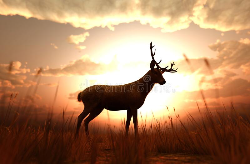 Олени в поле травы на заходе солнца иллюстрация вектора