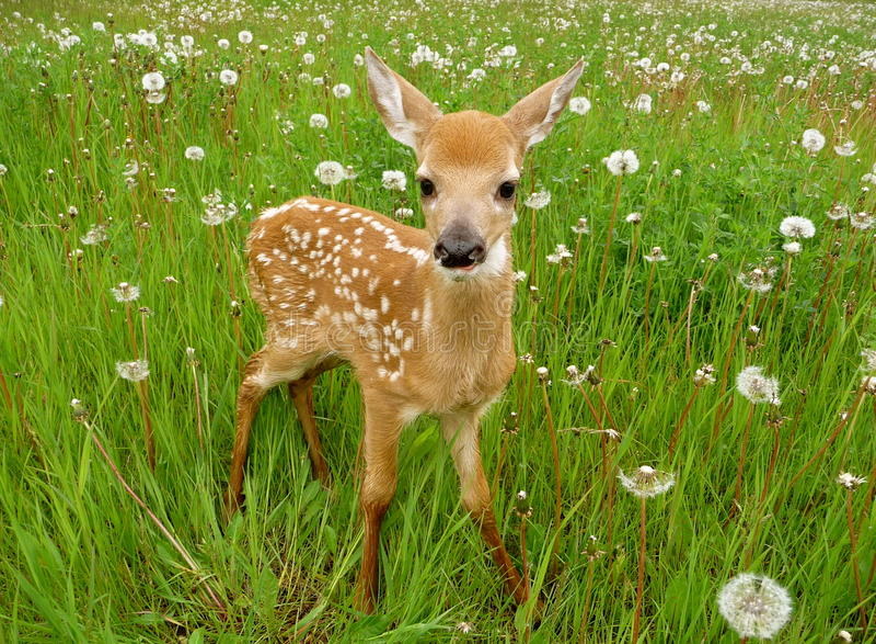 олени младенца милые стоковая фотография