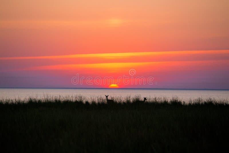 Олени на предпосылке захода солнца стоковая фотография