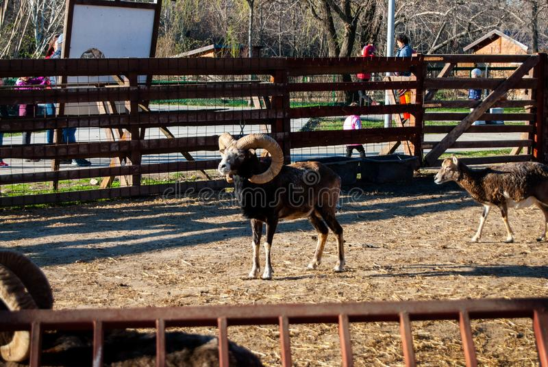 Олени на зоопарке стоковое фото rf