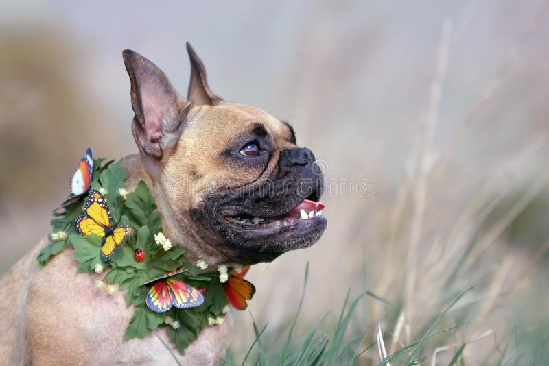 Олень и черная собака французского бульдога маски с воротником лист и бабочки перед расплывчатой предпосылкой стоковая фотография rf