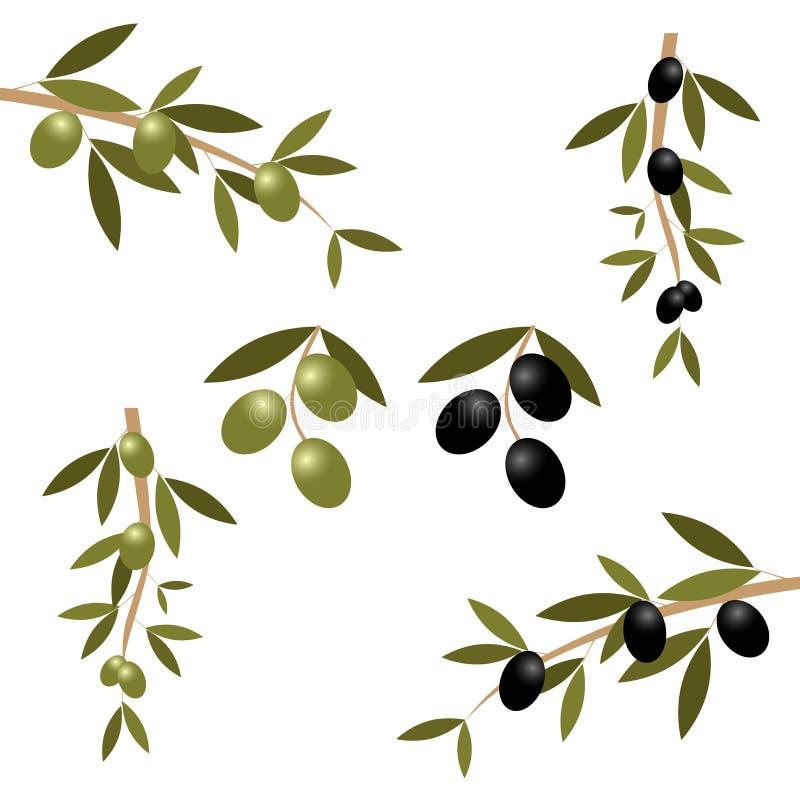 оливка ветви иллюстрация вектора