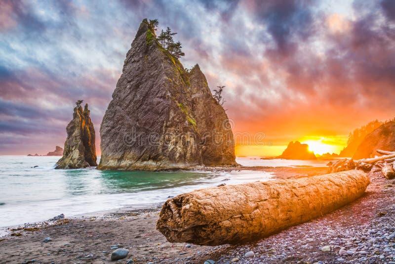 Олимпийский национальный парк, Вашингтон, пляж США стоковое фото rf