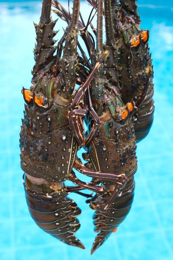 омары 3 стоковые фотографии rf