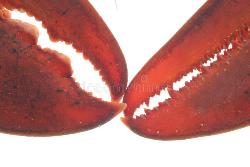 омар стоковая фотография