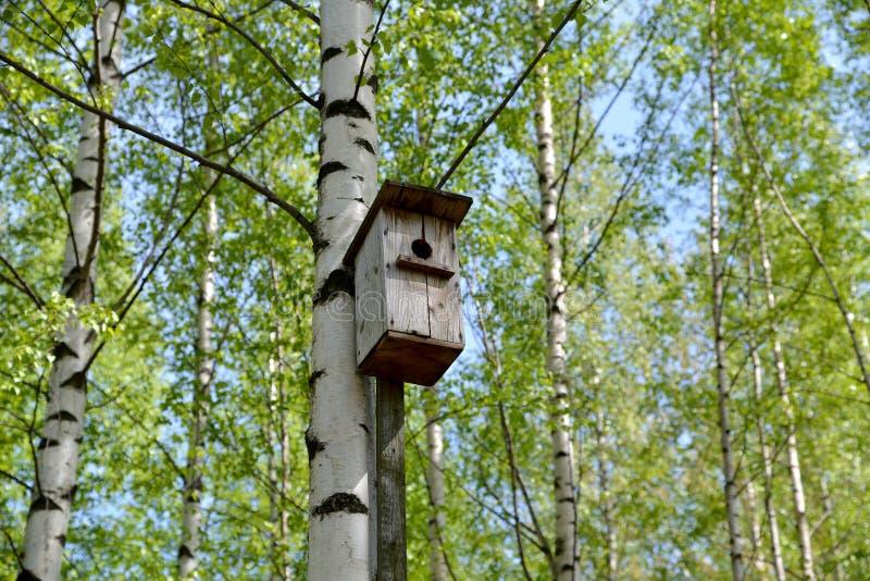 дом птицы старая стоковые изображения
