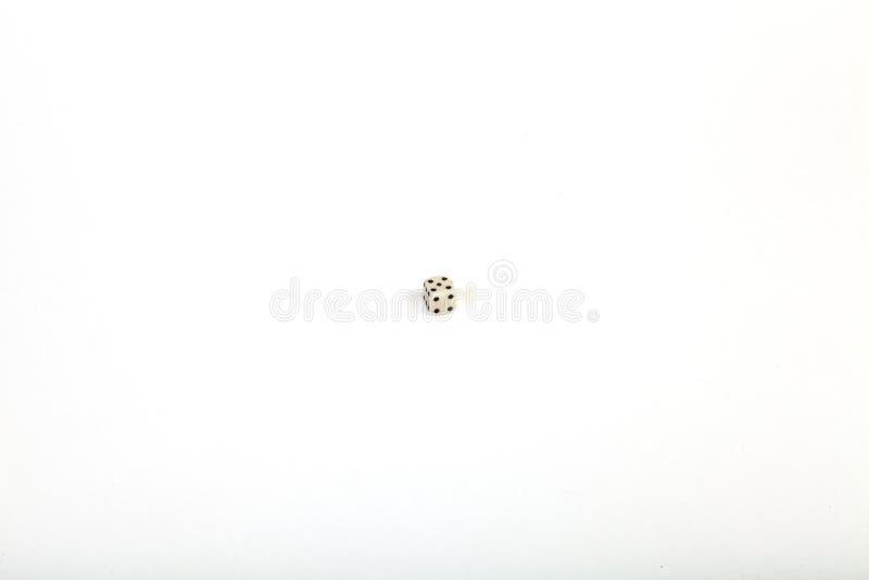 Она очень небольшой костью помещенной в центре большой белой изолированной предпосылки стоковое фото rf