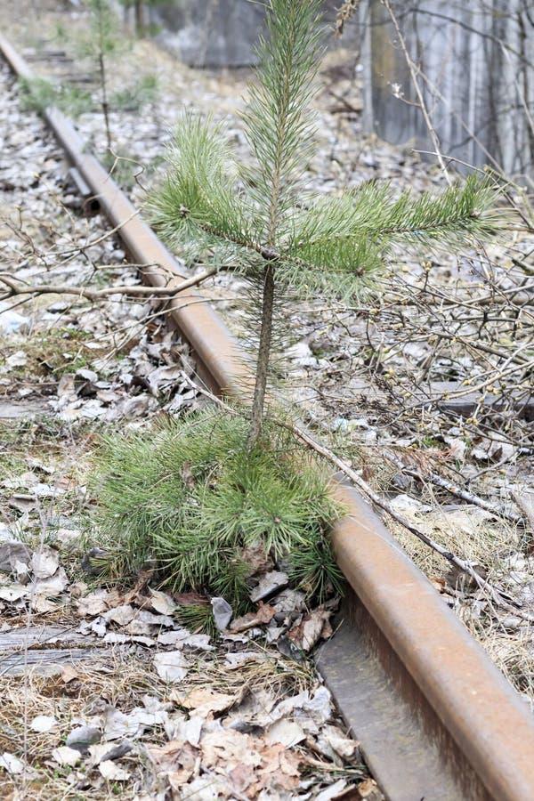 Железная дорога деревянные слиперы ретро она перерастана с травой не пошл натренировать стоковое фото rf