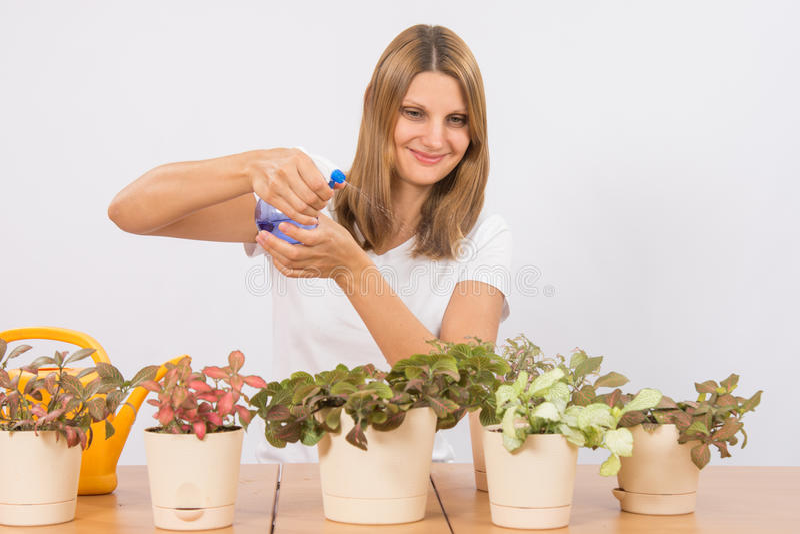 Она распыляет от комнатных растений брызга стоковое изображение rf