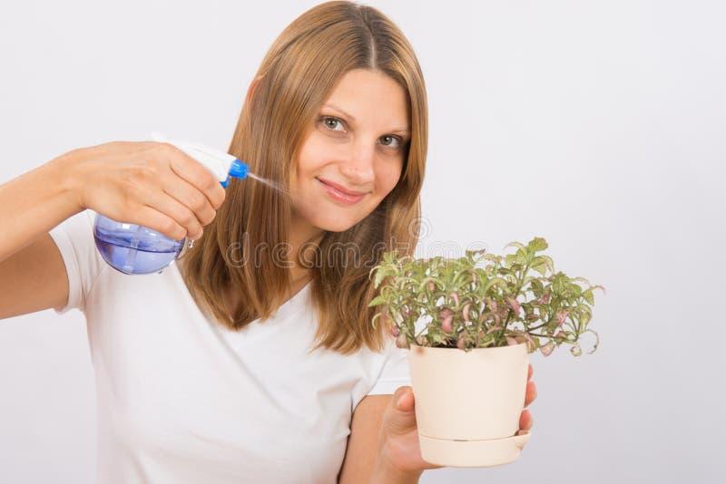 Она moisturizes комнатное растение стоковые фото