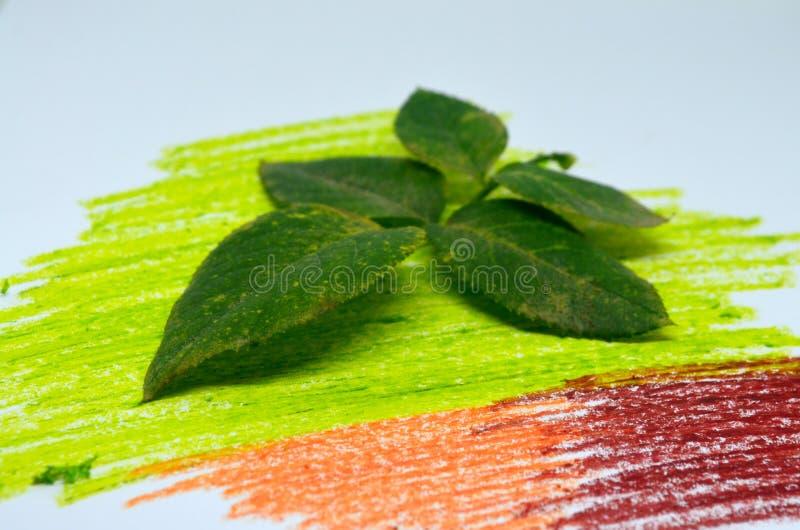 Оно листва ` s красочная стоковые фото