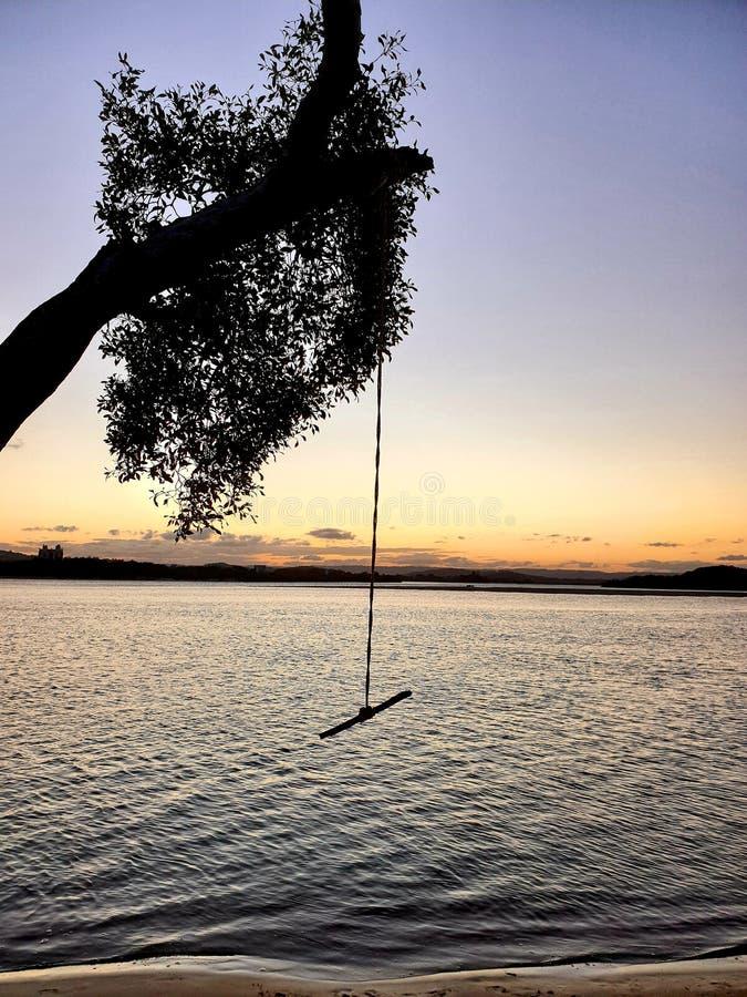 Опасное качание дерева на двойных водах Northshore стоковое фото rf