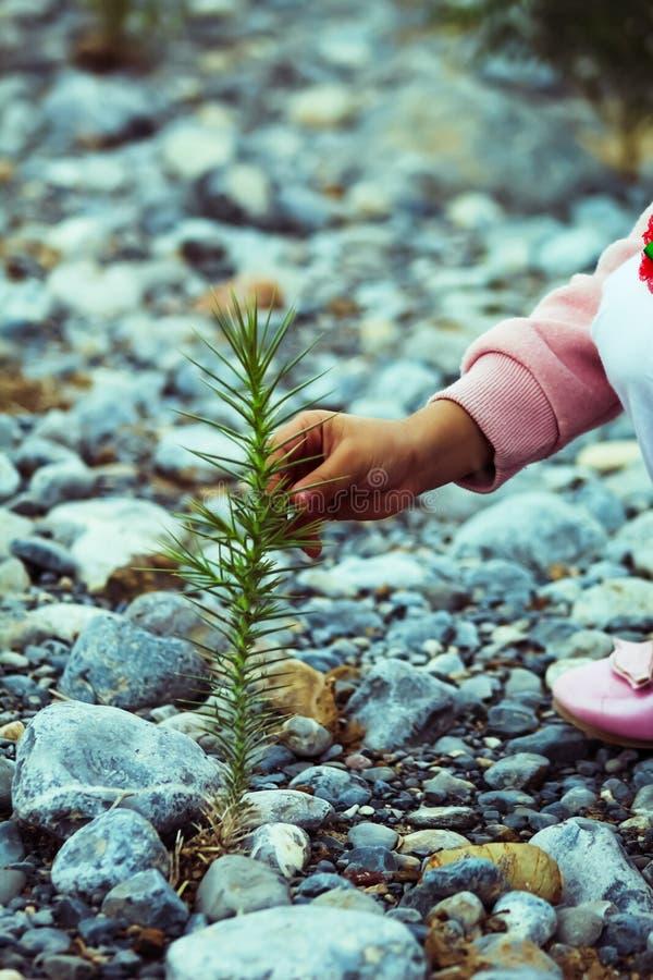 Опасное растение в дикой природе стоковая фотография