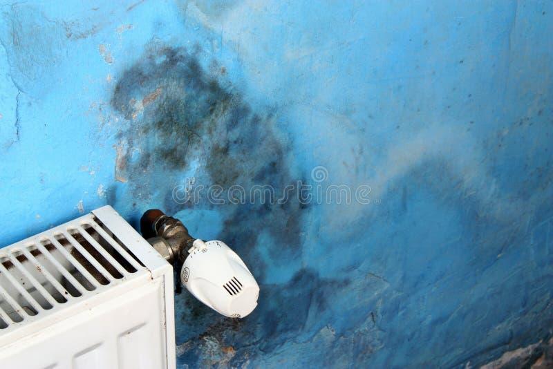 Опасный грибок прессформы стоковые фото