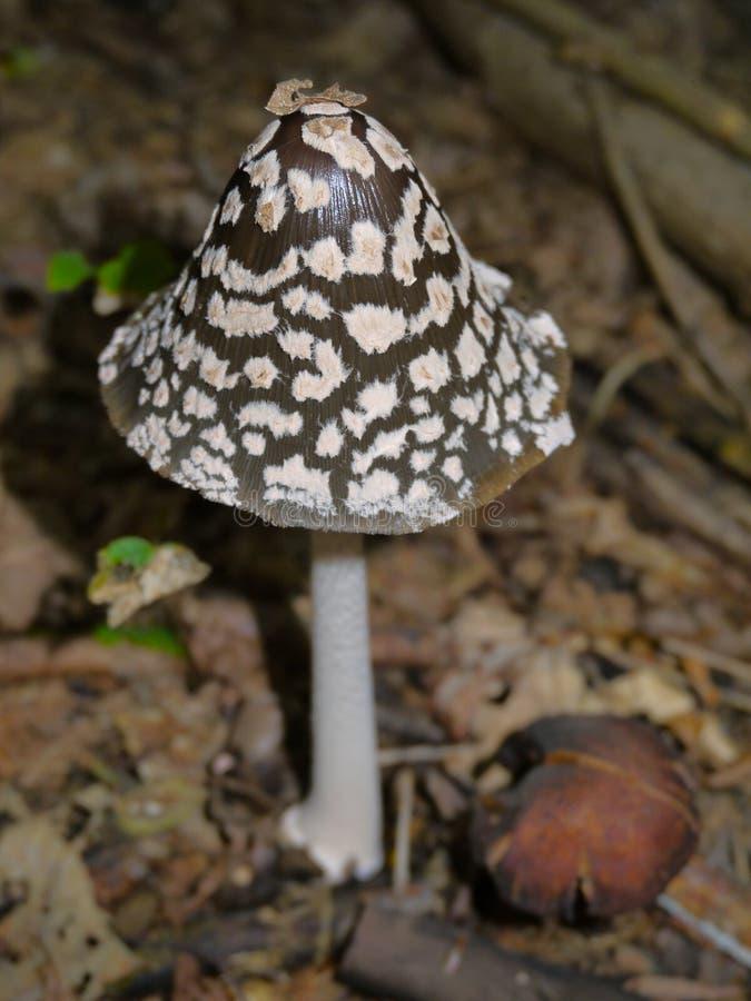 Опасный гриб стоковые изображения