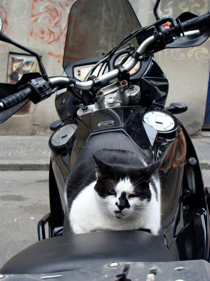 Опасный кот на велосипеде стоковое фото rf