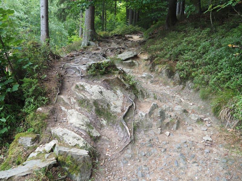 Опасный путь горы с суками и камнями стоковое изображение